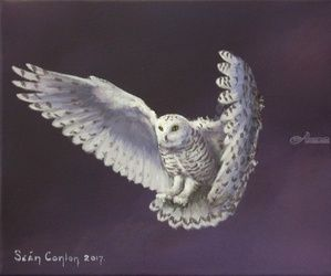Night Owl, Paintings, Fine Art, Wildlife, Acrylic, By Sean Conlon