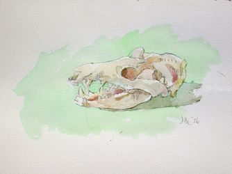 Opossum (Didelphis virginiana), Paintings, Impressionism, Anatomy, Watercolor, By Marc Clamage