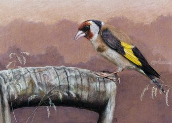 "Original pastel drawing<br>""European Goldfinch"", Pastel, Realism, Animals, Pastel, By Mikhail Vedernikov"