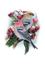 "Original pastel drawing ""Pine<br>grosbeaks"", Pastel, Realism, Animals, Pastel, By Mikhail Vedernikov"