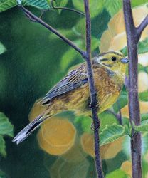 "Original pastel drawing<br>""Yellowhammer"", Pastel, Realism, Animals, Pastel, By Mikhail Vedernikov"
