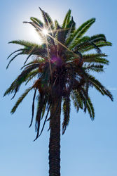 Palm over Santa Monica, Photography, Photorealism, Cityscape, Photography: Premium Print, By Mike DeCesare