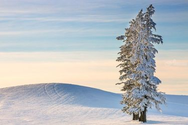 Palouse Winter, Photography, Photorealism, Landscape, Photography: Premium Print, By Mike DeCesare
