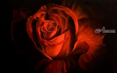 Passion, Paintings, Fine Art,Realism, Floral, Oil,Painting, By Michael Malta