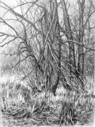 PLEIN AIR 06/08-03-2017 (TREES), Drawings / Sketch, Fine Art,Impressionism,Realism,Romanticism, Landscape, Pencil, By Dima Braga