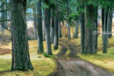 Ponderosa Path, Photography, Photorealism, Landscape, Photography: Premium Print, By Mike DeCesare