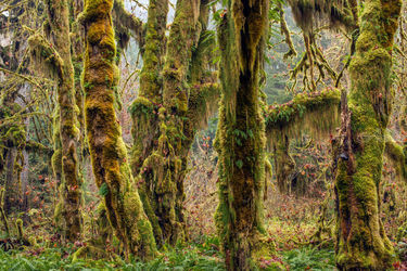 Rain Forest, Photography, Photorealism, Landscape, Photography: Premium Print, By Mike DeCesare