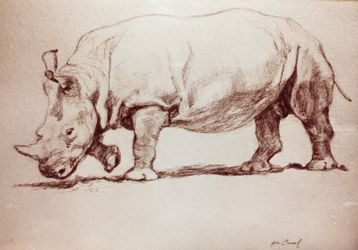 Rhinoceros, Drawings / Sketch, Fine Art, Animals, Pencil, By James Cassel