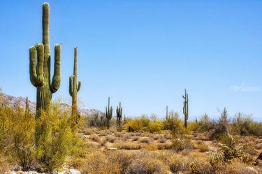 Saguaro, Photography, Photorealism, Landscape, Photography: Premium Print, By Mike DeCesare