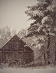 Snowfall, Photography, Photorealism, Nature, Photography: Metal Print, By Elizabeth DeFeo