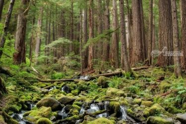 Sol Duc Forest, Photography, Photorealism, Landscape, Photography: Premium Print, By Mike DeCesare