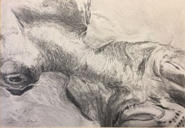 Submerged, Drawings / Sketch, Realism, Animals, Pencil, By James Cassel