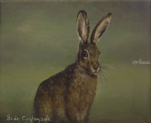 Summer Hare, Paintings, Fine Art, Wildlife, Acrylic, By Sean Conlon