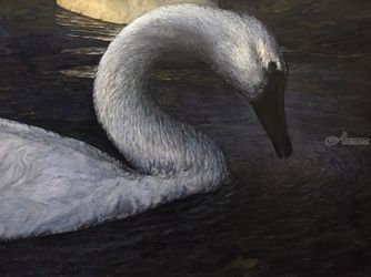 Swan, Paintings, Fine Art,Realism, Animals,Composition,Daily Life,Figurative,Inspirational,Nature,Wildlife, Watercolor, By James Cassel