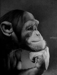 THE THINKER, Drawings / Sketch, Photorealism,Realism, Animals,Portrait,Wildlife, Pencil, By Miro Gradinscak