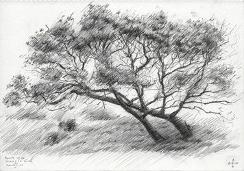 Tree at The Hague Golf 1 -<br>03-06-14, Drawings / Sketch, Abstract,Fine Art,Impressionism,Realism, Composition,Figurative,Landscape,Nature, Pencil, By Corne Akkers
