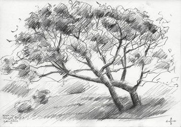 Tree at The Hague Golf 2 -<br>03-06-14, Drawings / Sketch, Abstract,Cubism,Fine Art,Impressionism,Realism, Composition,Figurative,Inspirational,Landscape,Nature, Pencil, By Corne Akkers