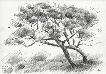Tree at The Hague Golf 3 -<br>03-06-14, Drawings / Sketch, Abstract,Cubism,Fine Art,Impressionism, Composition,Figurative,Landscape,Nature, Pencil, By Corne Akkers