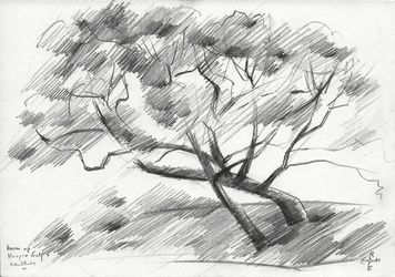 Tree at The Hague Golf 4 -<br>03-06-14, Drawings / Sketch, Abstract,Cubism,Fine Art,Impressionism, Composition,Figurative,Inspirational,Landscape,Nature, Pencil, By Corne Akkers
