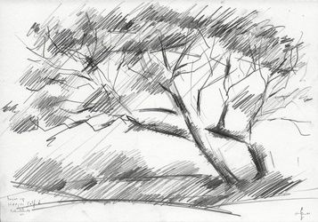 Tree at The Hague Golf 6 -<br>03-06-14, Drawings / Sketch, Abstract,Cubism,Fine Art,Impressionism,Realism, Composition,Figurative,Inspirational,Landscape,Nature, Pencil, By Corne Akkers