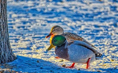 Winter Love, Photography, Fine Art, Wildlife, Photography: Premium Print, By Jim Stewart