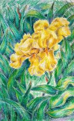 Yellow Iris, Pastel, Impressionism, Botanical,Floral, Oil,Pastel, By Tetyana K