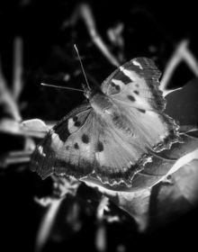 """Butterfly Left"", Photography, Commercial Design, Nature, Photography: Stretched Canvas Print, By Michael C Bertsch"