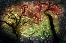 Autumn Canopy, Photography, Fine Art, Nature, Photography: Photographic Print, By Erin Carr
