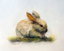 Bunny, Drawings / Sketch,Paintings,Pastel, Fine Art,Realism, Animals, Pastel, By Loretta Luglio