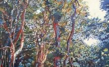 Canopy of colour, Paintings, Abstract,Impressionism,Realism, 3-D,Landscape,Nature, Acrylic,Oil,Painting, By Paul Williams