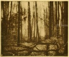 Cook Forest Mist, Printmaking, Existentialism, Landscape, Ink, By Thomas Norulak