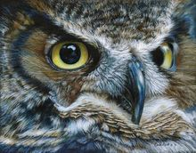 Dark Owl, Drawings / Sketch,Paintings, Photorealism,Realism, Nature,Wildlife, Painting,Pencil, By Carla Kurt