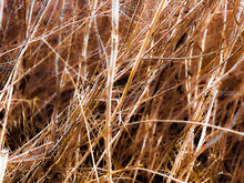 dry brown grass field texture abstract background, Photography, Photorealism, Botanical, Nature, Digital, Photography: Photographic Print, By sutee monchitnukul