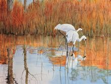Duet, Paintings, Fine Art, Wildlife, Watercolor, By Vicky Lilla