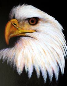 EAGLE, Paintings, Realism, Wildlife, Acrylic, By Jon Quinn