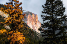 Mountains with autumn tree Yosemite national park, California, USA, Photography, Photorealism, Landscape, Nature, Digital, Photography: Photographic Print, By sutee monchitnukul