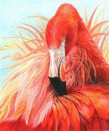 Red Flamingo, Drawings / Sketch,Paintings, Photorealism,Realism, Nature,Seascape,Wildlife, Painting,Pencil, By Carla Kurt