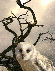Snow Owl, Digital Art / Computer Art, Realism, Animals, Digital, By William Clark