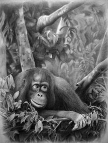 TEENAGER, Drawings / Sketch,Illustration, Fine Art,Realism, Animals, Pencil, By Miro Gradinscak