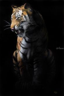 Tiger in the dark, Paintings, Photorealism, Animals, Oil, By Ivan Pili